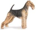 airedale terrier standard akc size -image