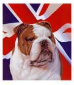 english bull dogs artwork