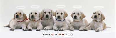 puppy angels poster art