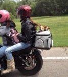 image of motorcycle dog carrier