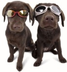 Doggles ILS Protective Dog Goggles