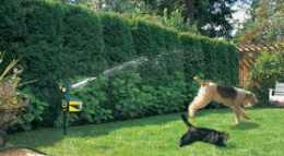 stop dog from digging with a motion activated sprinkler