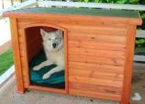 outback dog house