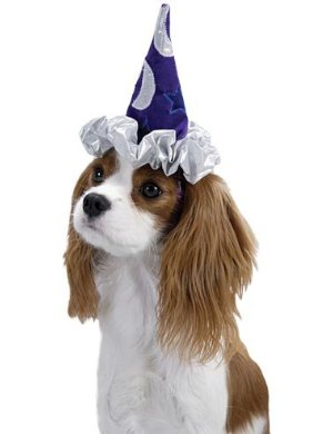 hats for dogs - dog wearing wizard costume