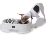 dog eating from pet dining bowl