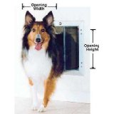 dog door for home alone dogs