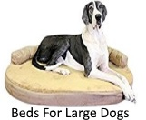 beds for large dogs