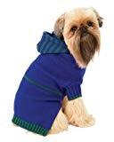 brussels griffon wearing blue hoodie