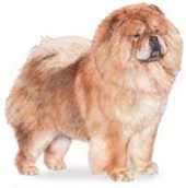 chow chow dog standing image with no background