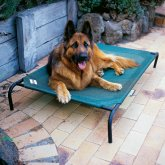 Coolaroo Large Steel-Framed raised Pet Bed