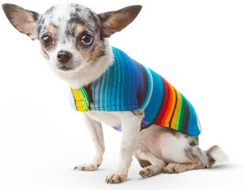 dog colorful poncho