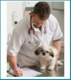 Vet with dog