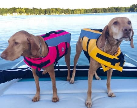 two dogs wearing life jackets on a boat