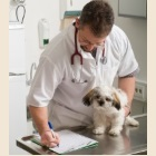 dog vet health