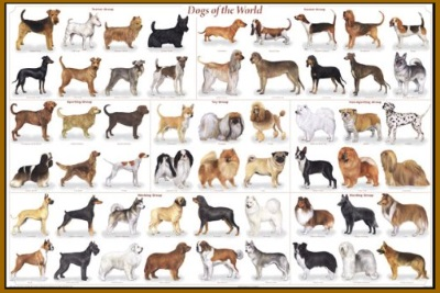 dogs of the world graphic poster