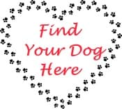 find your dog graphic