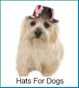 hats for dogs