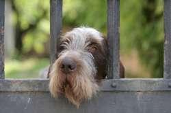 sad looking dog behind gate