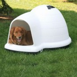 indigo igloo dog house medium size