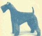 irish blue terrier, kerry blue terrier dog