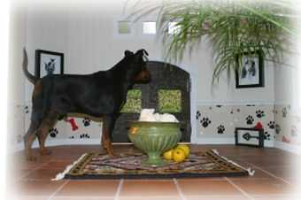 interior of a custom dog houses in a Spanish style