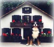 custom dog house swiss style
