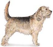 otterhound dog