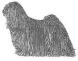 puli herding dog