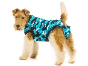 recovery suit for dogs while healing