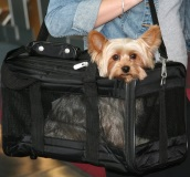 image of Sherpa Original Deluxe Pet Carrier