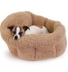 unique and out of the ordinary dog beds