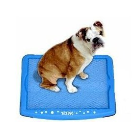 indoor dog potty wizdog