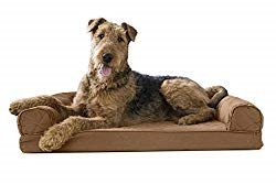 airedale terrier on couch