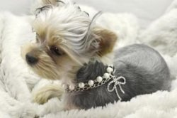 image of Pet Necklace with Bling Pearls and Rhinestones Bone Charm