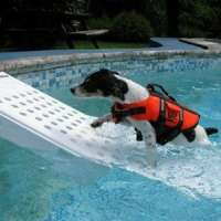 life jackets for dogs - pool safety ramp for dog
