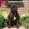 bull terrier calendar