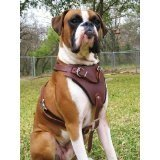 leather dog harness with