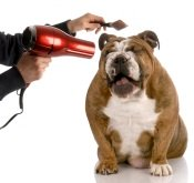 dog grooming products decal