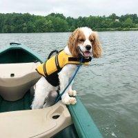 life jacket for dog