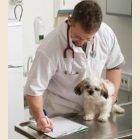 dog vet health