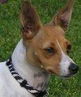 eco-friendly hemp dog collars