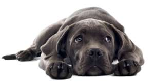 bladder infections in dogs