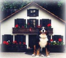 custom dog house swiss style