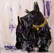 scottish terrier pet portrait