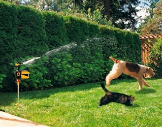 stop dog digging with a motion activated sprinkler