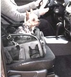 small dog booster car carrier seat