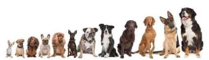 twelve dog breeds