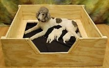wooden dog whelping box