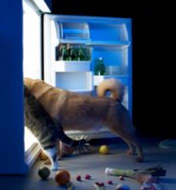 Pets looking in fridge