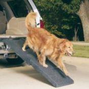 Golden Retriever using vehicle dog ramp